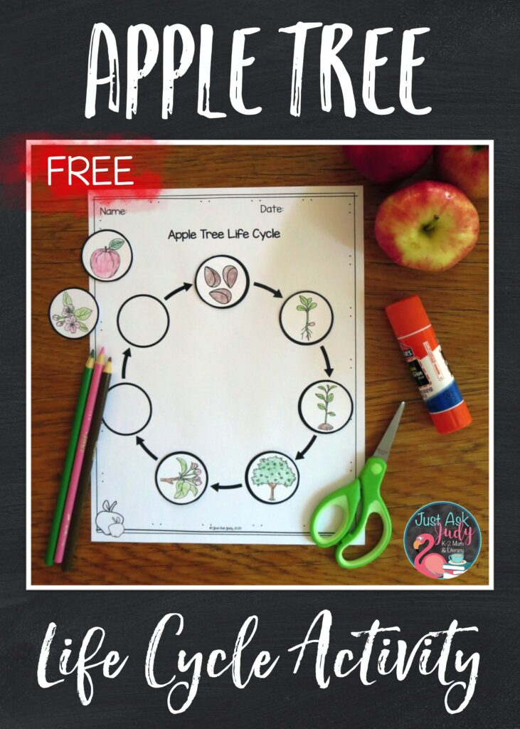 Download this free cut and paste apple tree life cycle activity, a perfect supplement for a first or second grade science unit.
