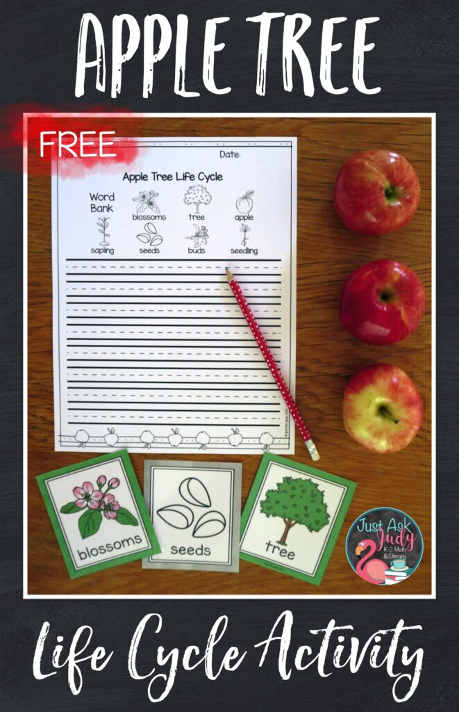 Try this free paper for writing about the apple tree life cycle in first and second grades. Use the color or black/ white vocabulary cards as part of your instruction, as a center activity, or as a visual support for reading and writing activities.