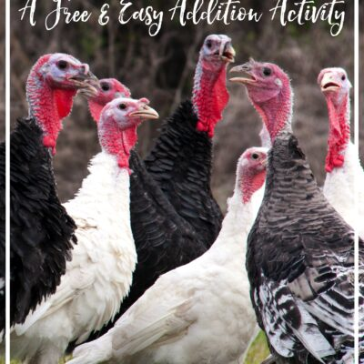 Who Wants a Free and Easy Count On Turkey Activity?